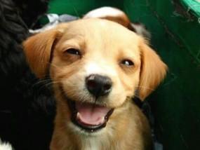 laughing-dog