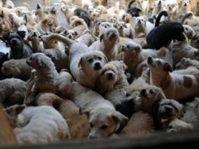 china_animal_shelter_031
